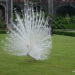 Isola Bella garden, Piedmont, Italy