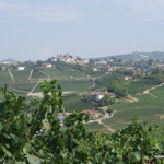 vineyards in Barbaresco, Piedmont, Italy