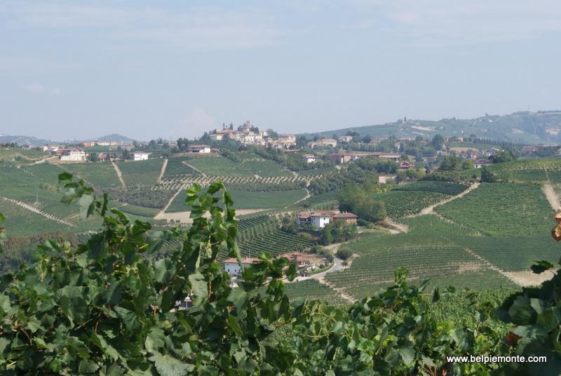 vineyards in Barbaresco, Piedmont, Italy