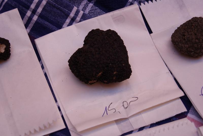 black truffle, Piedmont, Italy