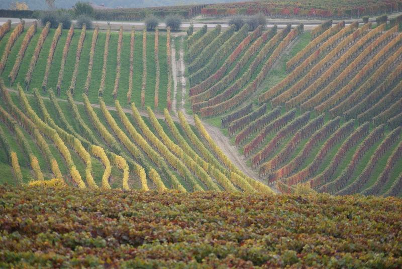 Langhe hills in autumn
