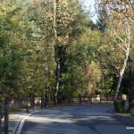 Aglie' - a street dividing castle park