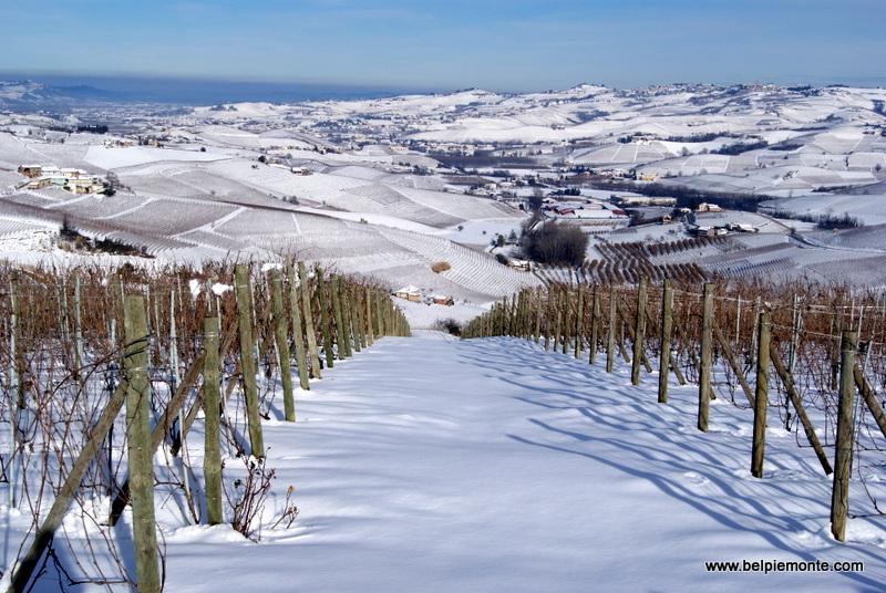 Langhe vineyards, Piedmont, Italy