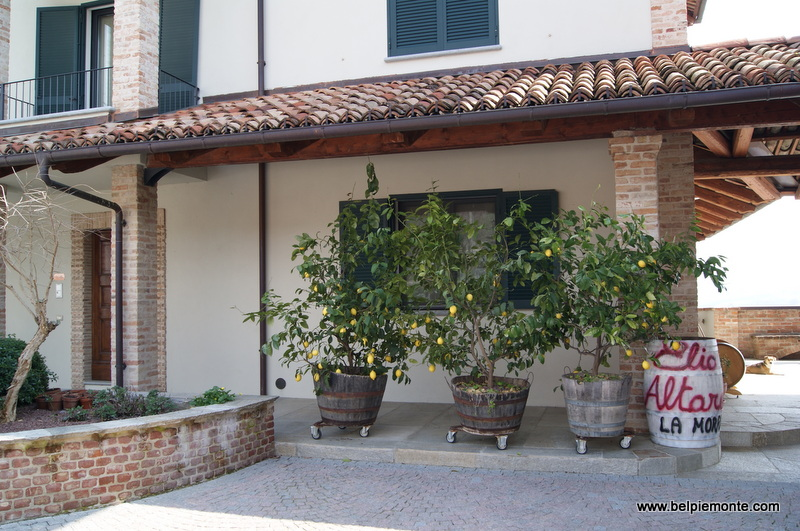 Cantina Elio Altare, Piedmont, Italy