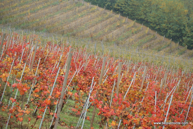 Autumn in the Langhe, Piedmont, Italy
