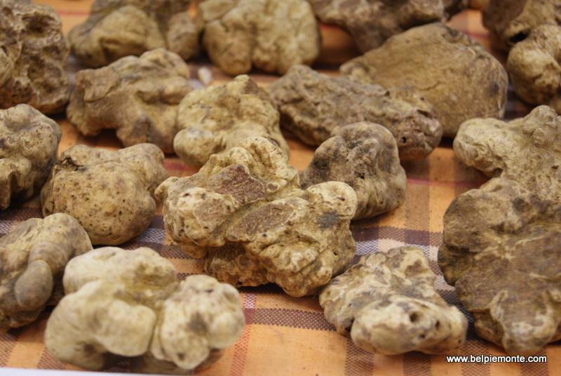 White Truffles, Alba, Piedmont, Italy