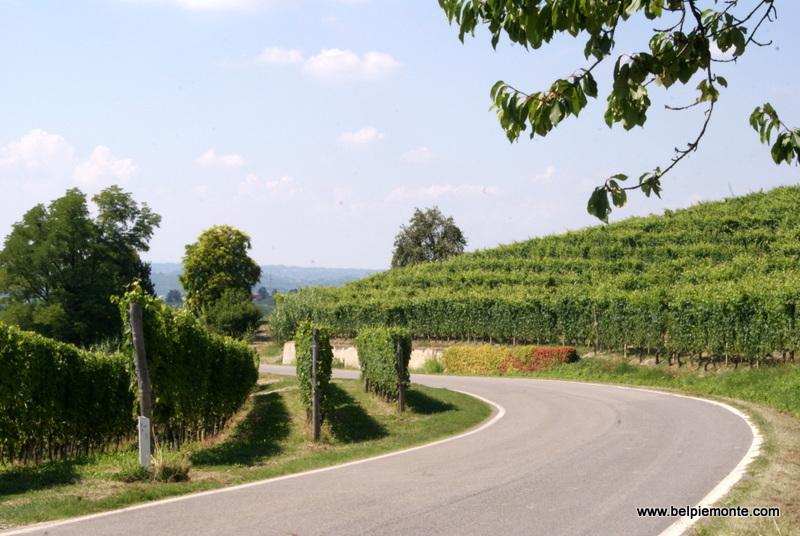 Langhe area, Piedmont, Italy