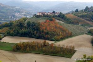 winnice Diano d'Alba