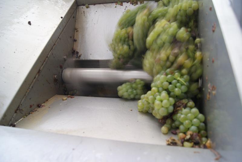 winifikacja, winnica Rivetto, Piemont, Włochy