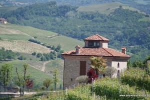 winnica w Langhe, Piemont, Włochy