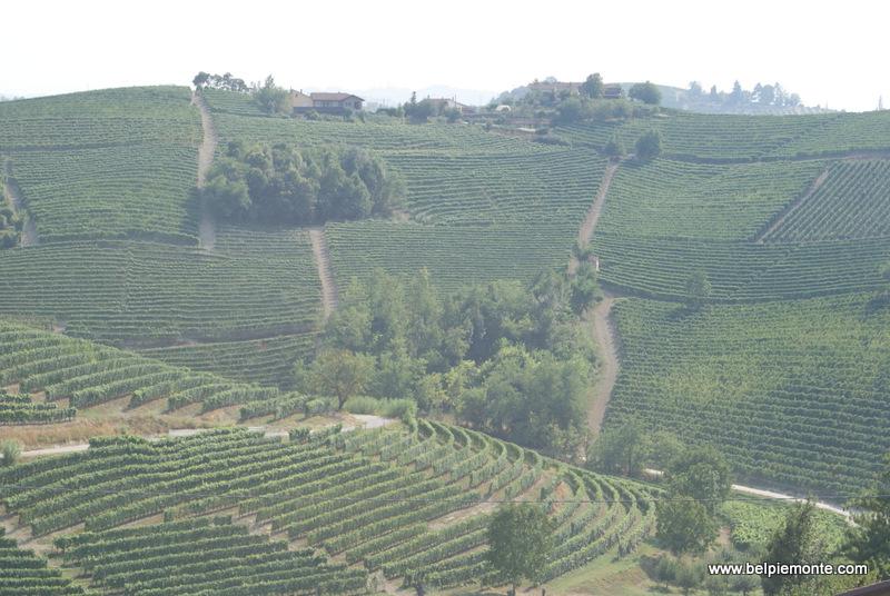 winnice Langhe, Piemont, Włochy
