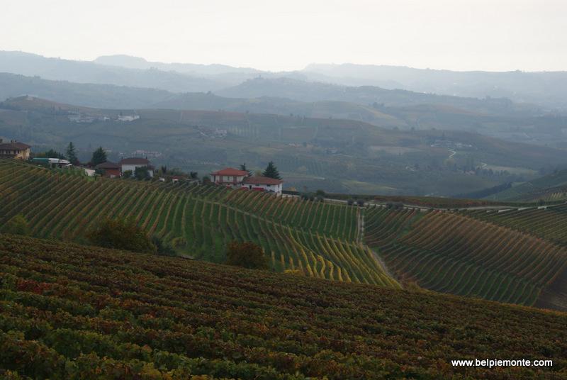 wzgórza Langhe, winnice, Piemont, Włochy