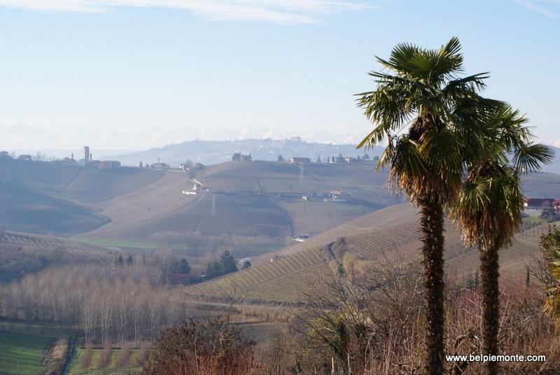 winnice okolic Barbaresco, Piemont, Włochy