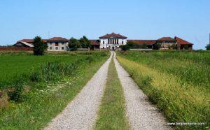 Pola ryżowe, Vercelli, Piemont, Włochy