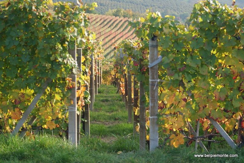 Langhe i Roero, Piemont, Włochy