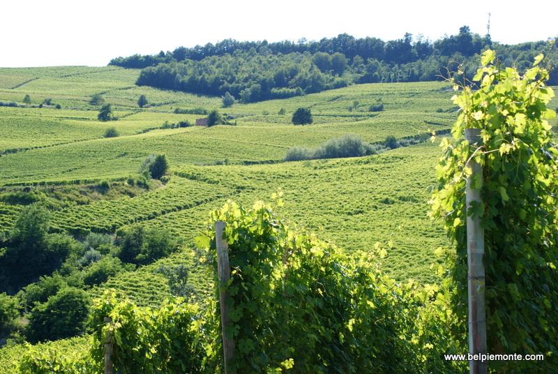Palas Cerequio, Piemont, Włochy