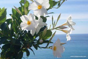 Kwiaty w Tropea, Kalabria, Wlochy